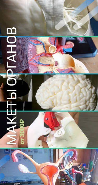 Анатомические макеты человеческих органов для УИРС